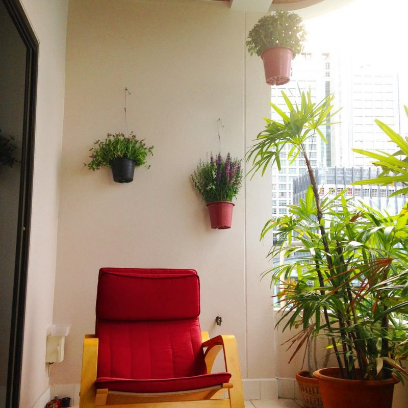 We've just got new plants for the balcony. #happysunday #flowers #lovelyday