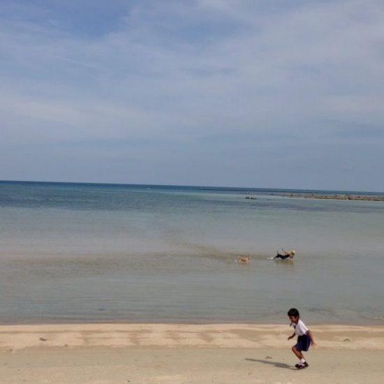 Cute dogs 🐶 and cute little girl on the beach 🌊 💦#beach
