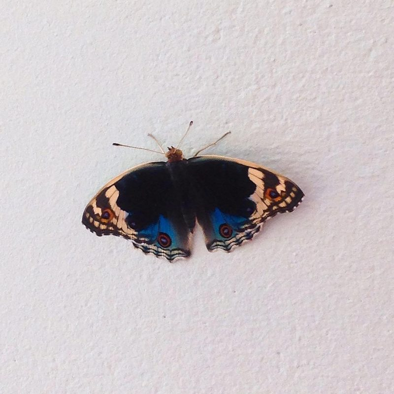 This is my new visitor today. 🦋 💕🦋🌴